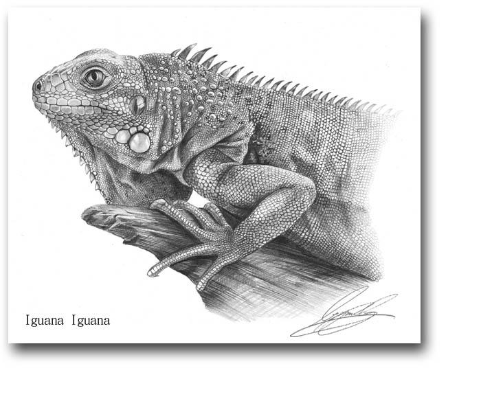 精细动物写实素描